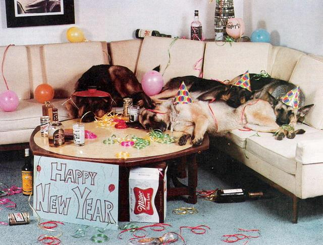 perros resaca happy new year