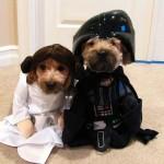 Perros fans de Star Wars