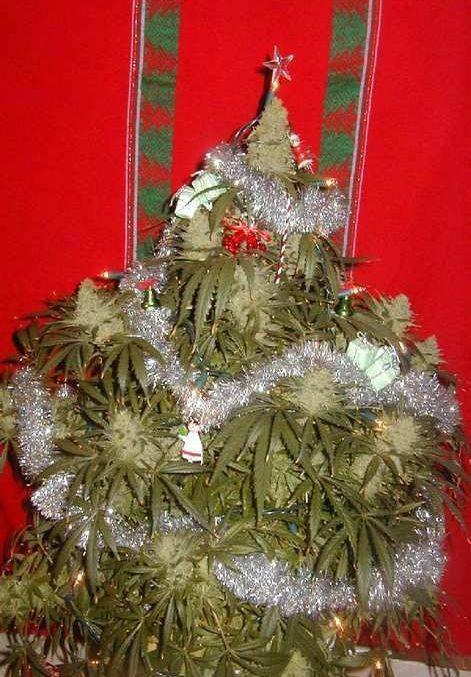 planta de marihuana de navidad