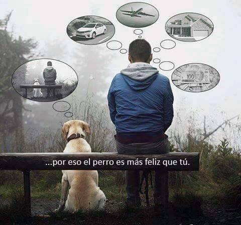 por eso el perro es mas feliz que tu