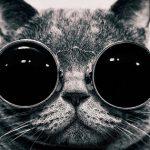 Portada Facebook – Gato con gafas