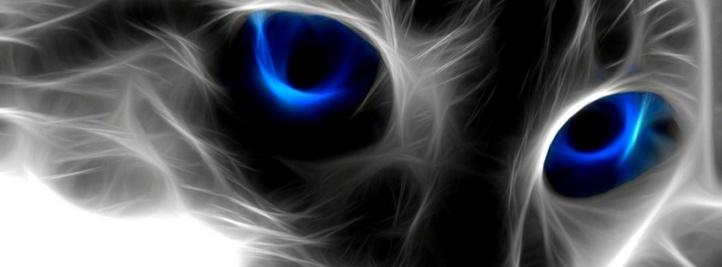portada facebook - gato electrico