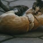 Portada Facebook – Gatos abrazándose