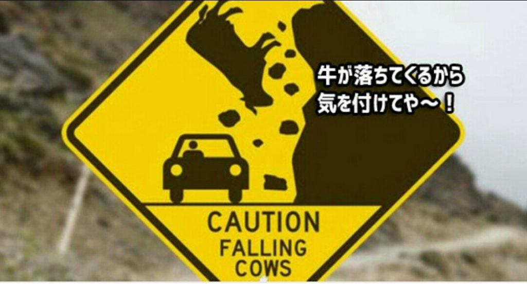 precaucion vacas cayendo por precipicio