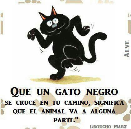 Que un gato negro se cruce en tu camino, significa que el animal va a alguna parte (Groucho Marx)