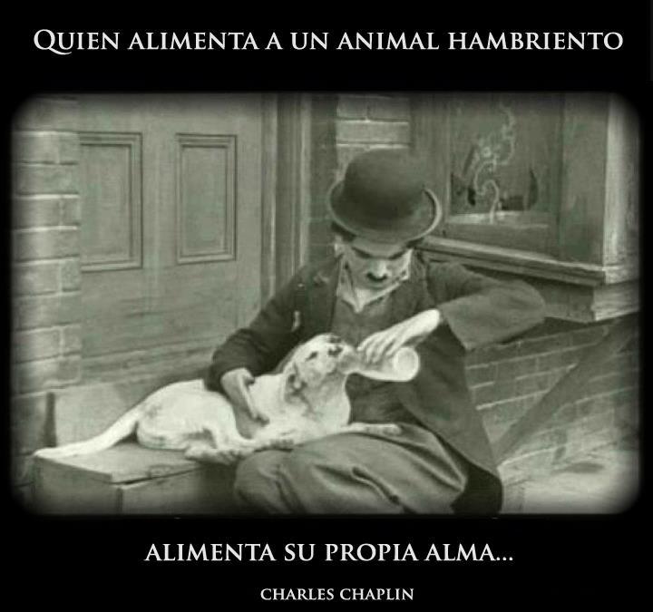 Quien alimenta a un animal hambriento alimenta a su propia alma