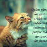 Quien piensa que los gatos son traicioneros, indiferentes e interesados es porque todavía no conoce a los humanos