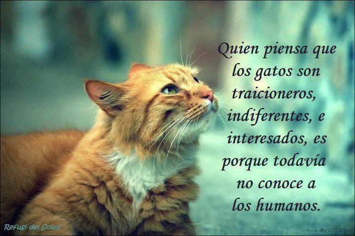 quien piensa que los gatos son traicioneros, indiferentes e interesados es porque todavia no conoce a los humanos