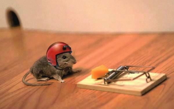 raton casco a volar