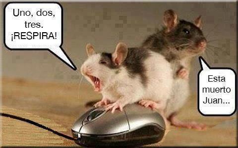 Intentando reanimar al ratón