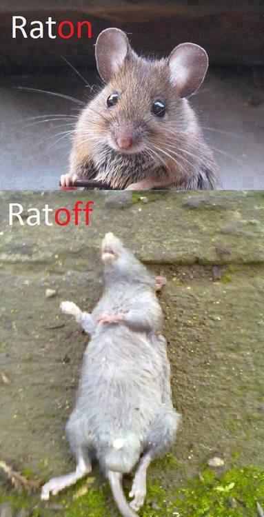 Ratón / Ratoff