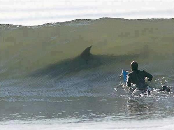 ¿Y tú que haces surfeando en mi zona?