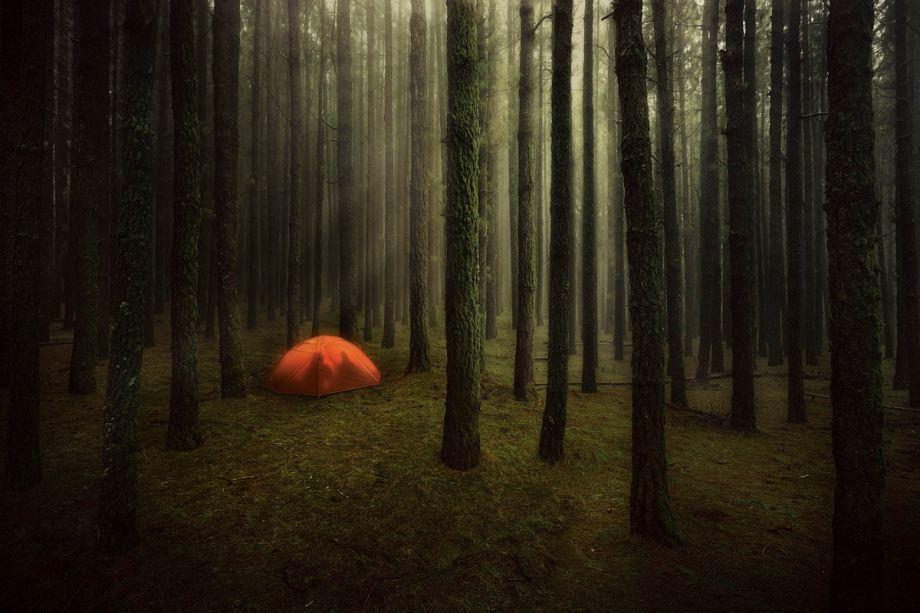 Tienda de campaña entre los árboles