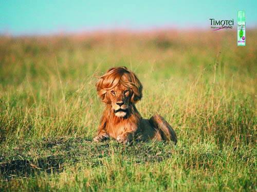 Timotei llega a la fauna africana