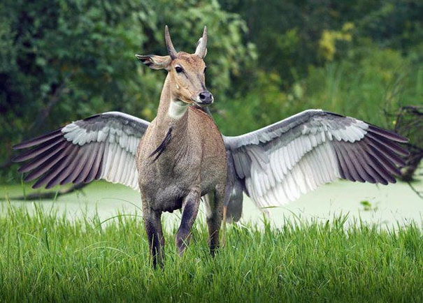 Animal mitológico