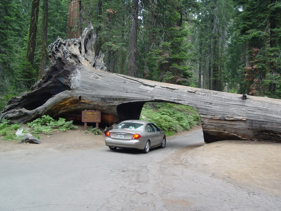 Túnel bajo un tronco