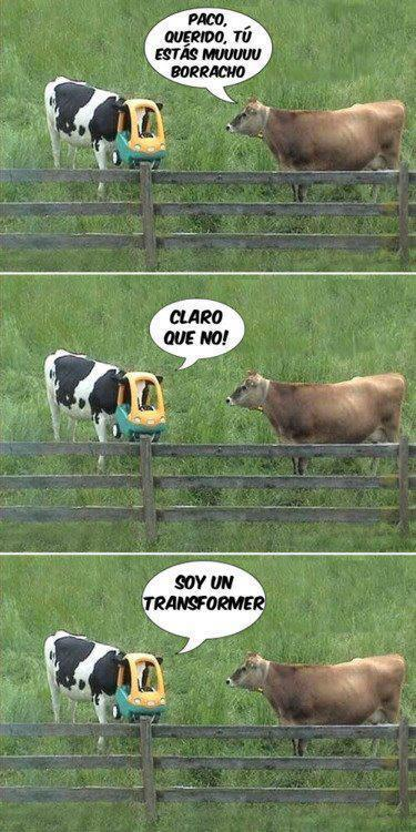 Vaca transformer