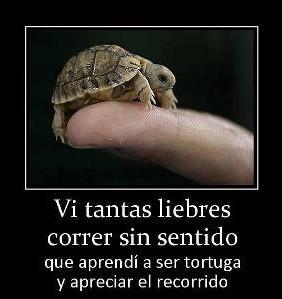 Vi tantas liebres corriendo sin sentido que aprendí a ser tortuga y disfrutar del camino