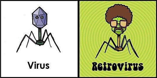 Virus y retrovirus