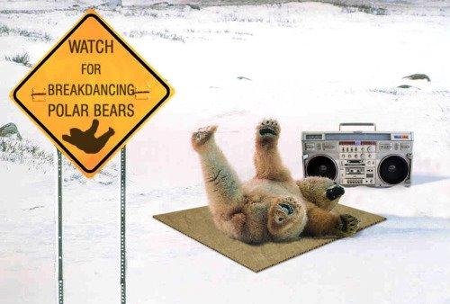 Watch for breakdancing polar bears